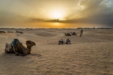 Camello Túnez