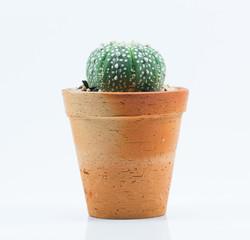 isolation cactus on white background
