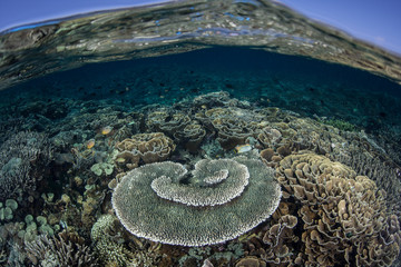 Healthy Shallow Reef