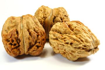 riesige Nüsse