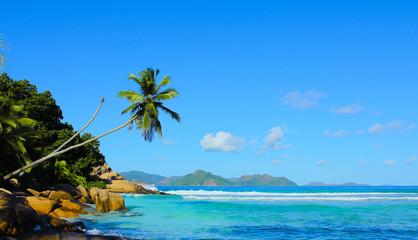 Ideal Palms Beauty