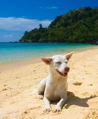 On a Beach Under the Sun