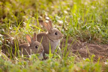 jeunes lapins au terrier