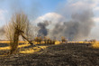 Wildfire in the field with burned dry grass and burned tree on a - 71015023