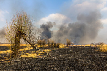 Wildfire in the field with burned dry grass and burned tree on a