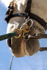 Detalle de caballo