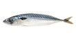 mackerel fish isolated - 71018020