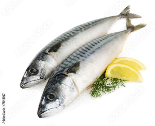 Papiers peints Poisson mackerel fish isolated