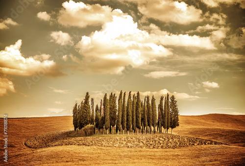 Fototapeta Beautiful autumn vinatge landscape