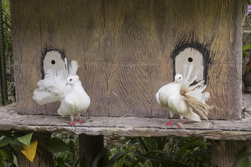The decorative white dove