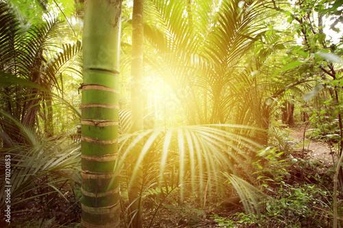 Forest light © Stillfx