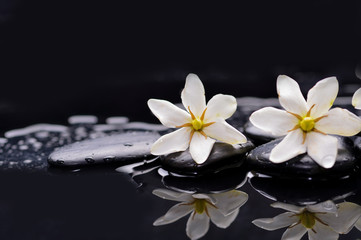 Two gardenia flower on pebbles –reflection background