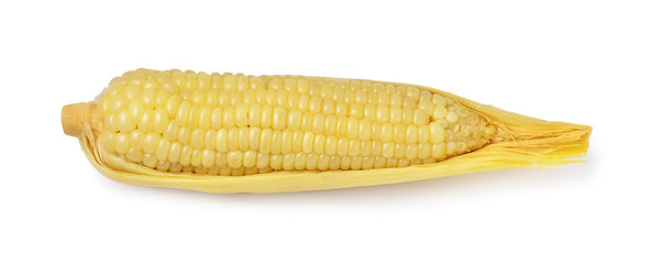 Boil corn isolated