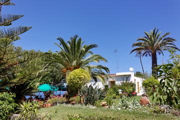 Jardin avec palmiers et parasol