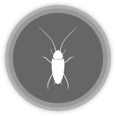 a cockroach in a grey Panel