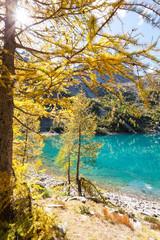 lago alpino con larici in autunno