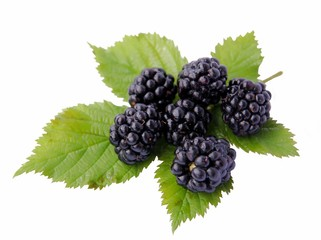 tasty blackberries