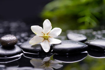 gardenia flower on pebbles with green plant
