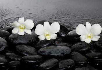 Three white orchid on pebbles –wet background