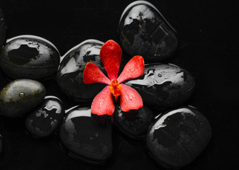 orchid and therapy stones
