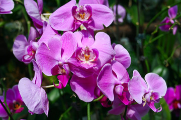 Beautiful, delicate orchid - Orchidaceae.