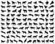 Big set of horses silhouettes, vector illustration - 71033697