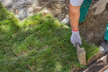 Worker installing sod 2