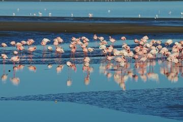 Flamingos in Walvisbay
