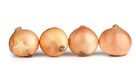 Fresh onion bulbs