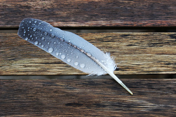 Feder mit Wassertropfen  auf einem Holztisch
