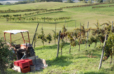 tractor and grapes rwos