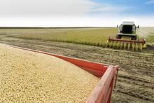Łączenie zbiorów soi w polu kombajn