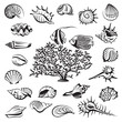 monochrome seashells set with coral and fish - 71041224