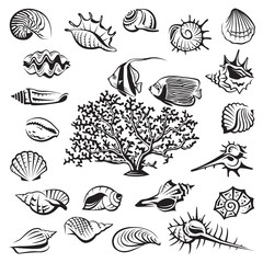 monochrome seashells set with coral and fish