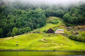 Norwegian landscape with horses
