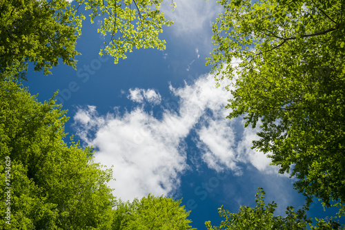 Aluminium Bossen Lush green foliage and sky with clouds in the forest in spring