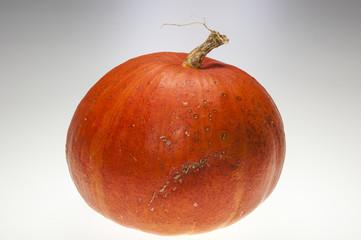 Pumpkin, orange, sparse, light grey background, studio, sophisti