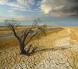 ecological problem