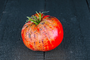 Rotten tomato on wooden background