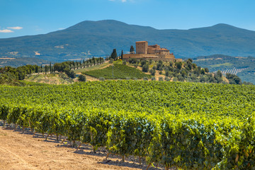 Castle overseeing Vineyard in Rows at a Tuscany Winery Estate, I