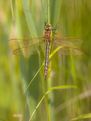 Dragonfly Perching on Plant