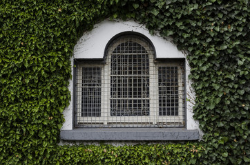 Old window on ivy covered wall