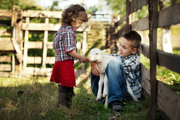 Children feeding little lamb