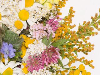 clover, chamomile, yarrow