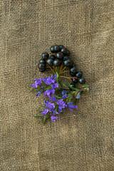 Цветы мелиссы турецкой и ягоды боярышника