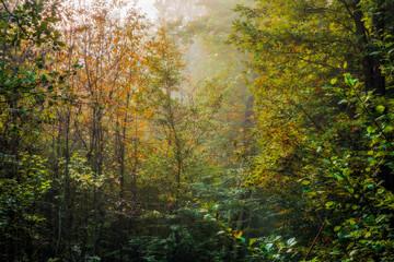 Enchanted Autumn Bavarian Forrest