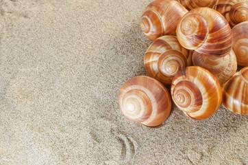 Морские ракушки лежат на песке