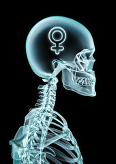 X-ray female thinking