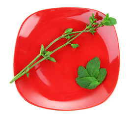Red square plate of fresh mint leaves and branches