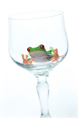 Red Eyed Tree Frog In Wine Glass